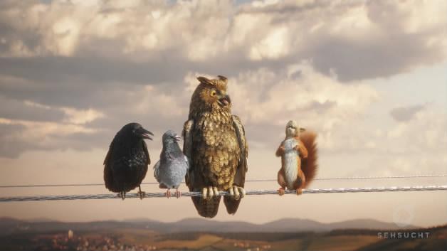 三只贱鸟一只松鼠动画逼真搞笑